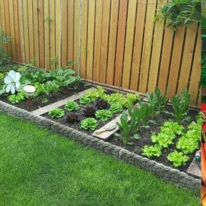 Best Gardening Books for Beginners Thumbnail